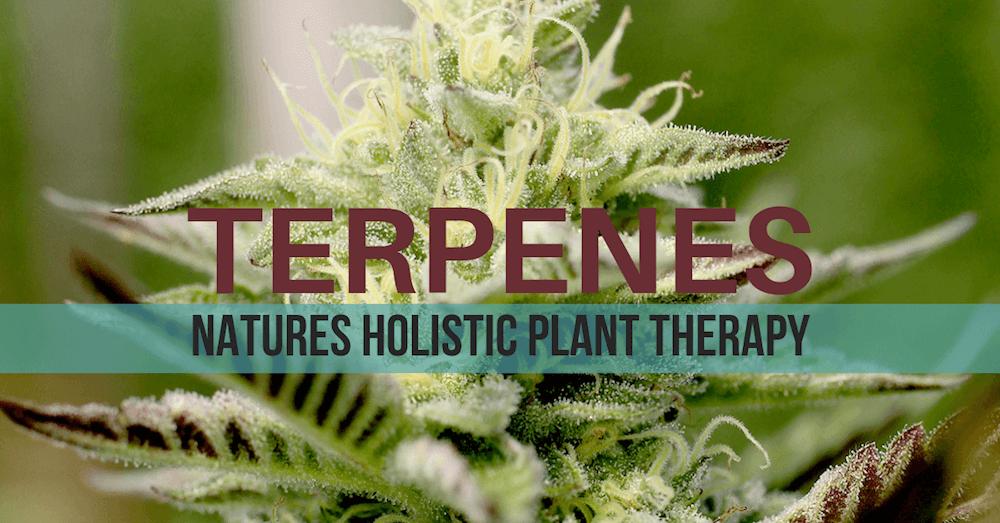 Cannabis Hemp Terpene Chart and list