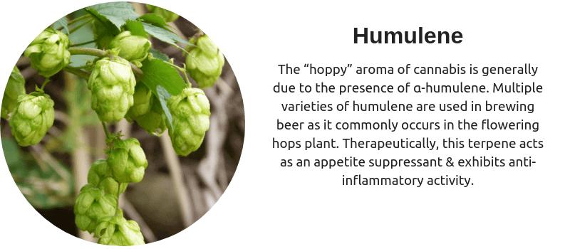 Cannabis Terpenes - Humelene