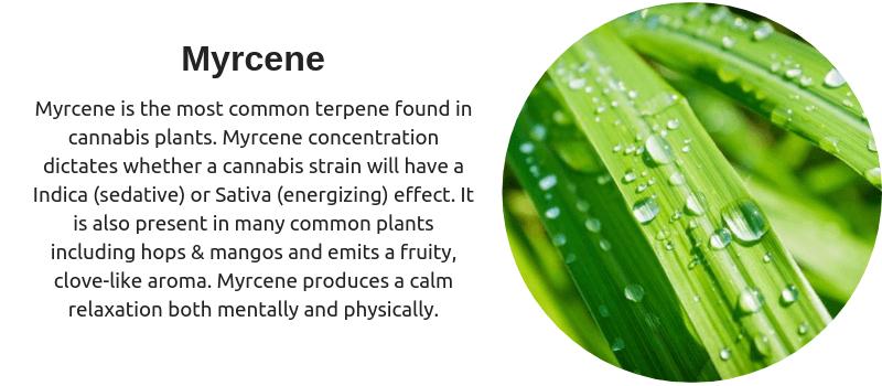 Cannabis Terpenes - Myrcene