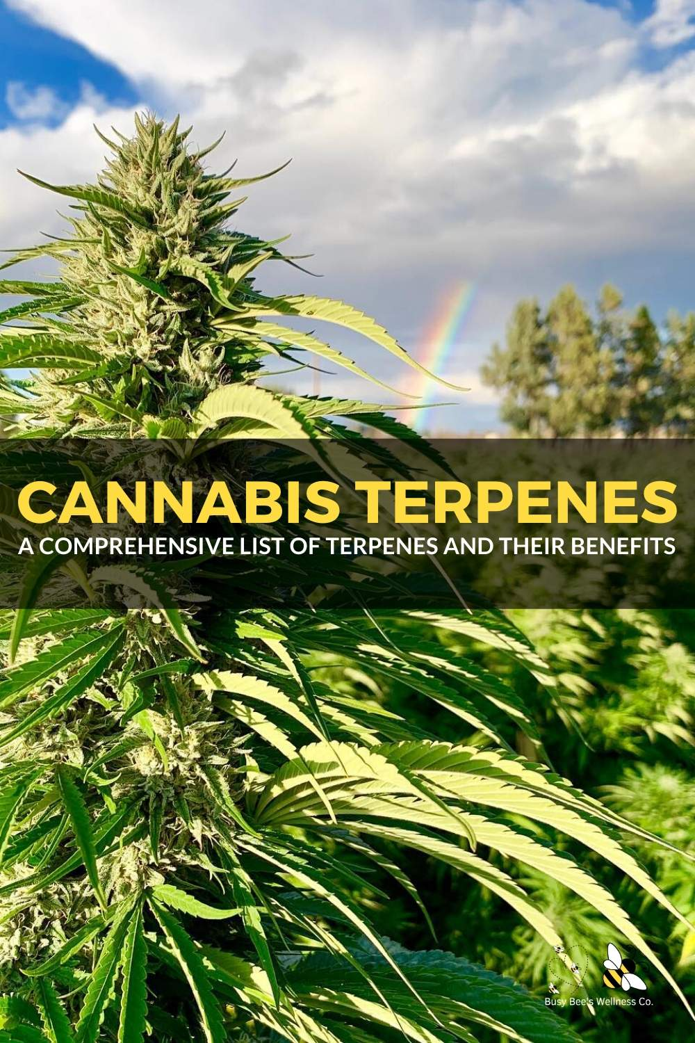 Cannabis & Hemp Terpenes List and Chart Listing out the benefits of each terpene found in hemp cbd