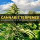 Cannabis & Hemp Terpenes List and Chart with all the benefits for better health